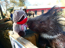 Wuschel mit Stachelschwein  (4)