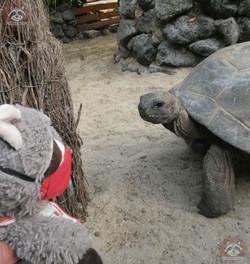 Schildkröte_mit_Wuschel
