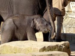 Elefanten  (9)