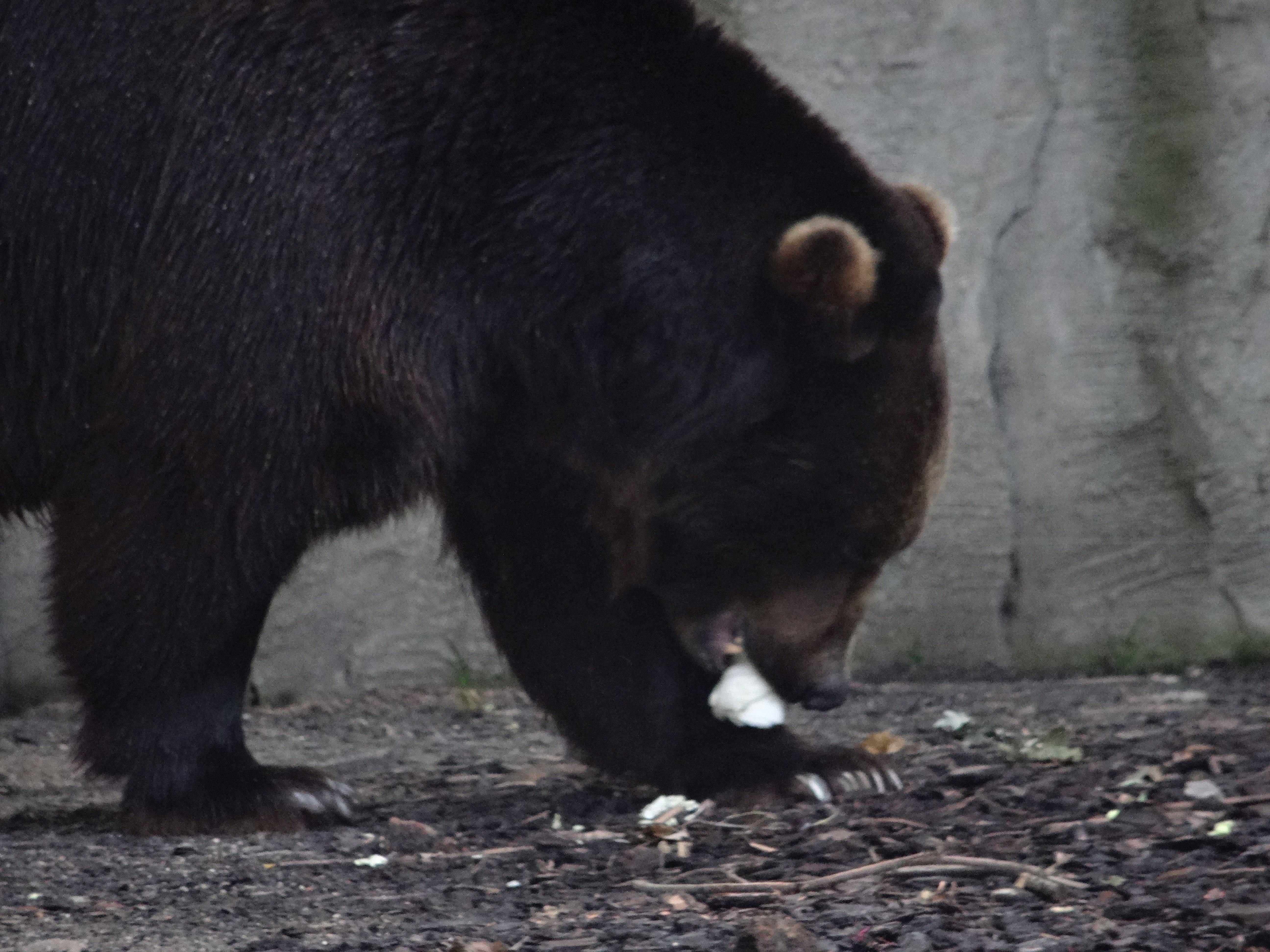 Bär  (2)
