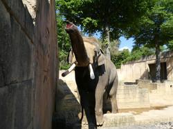 Elefanten  (12)
