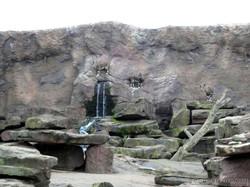 Nubischer Steinbock  (4)