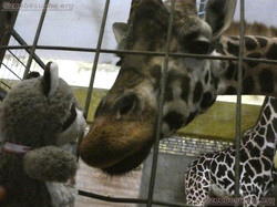 Wuschel mit Giraffe  (1)