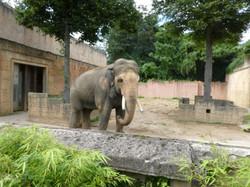 Elefanten  (37)
