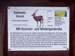 Dombrowski Hirsch  (5)