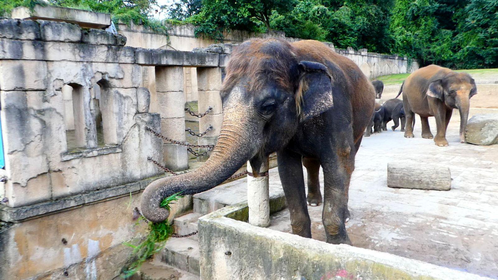 Elefanten  (11)
