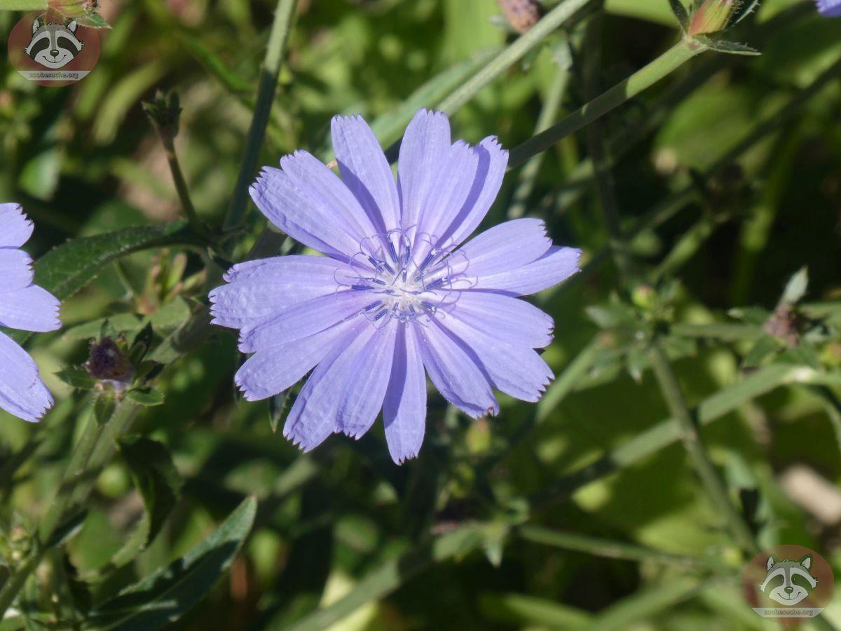 Blume (1)