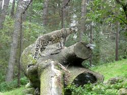 Schneeleopard (2)