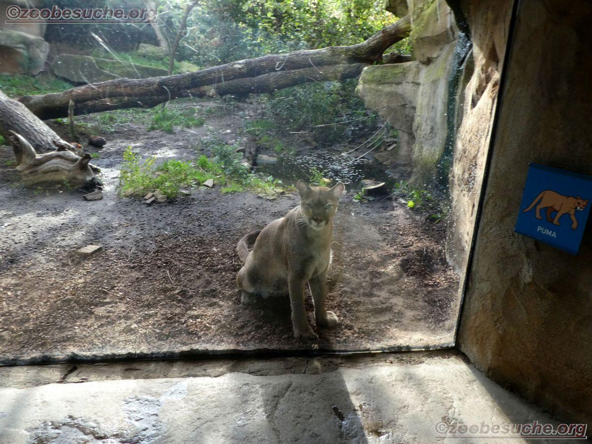 Puma  (7)