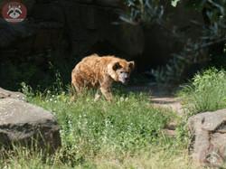 Hyäne  (2)
