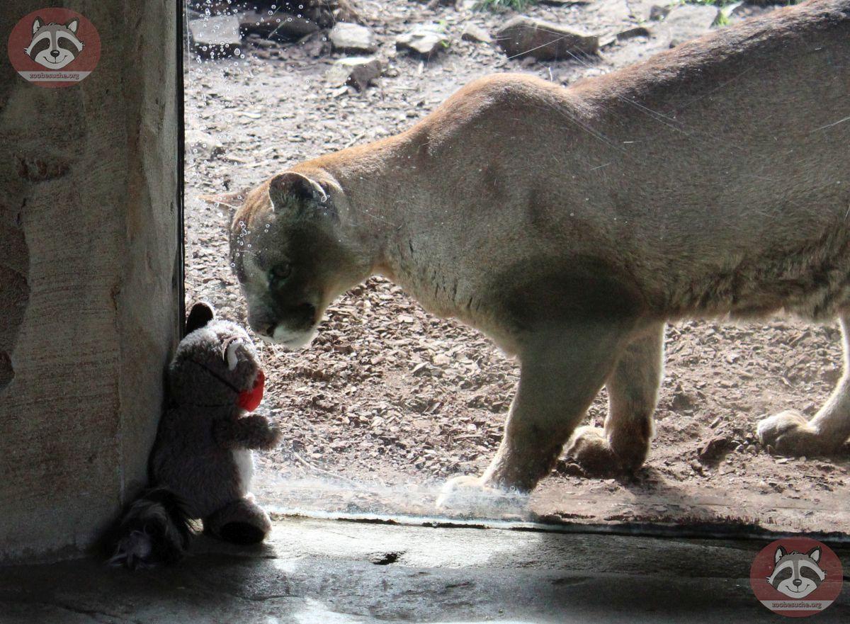 Wuschel mit Puma (11)