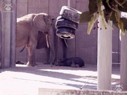 Elefanten (8)