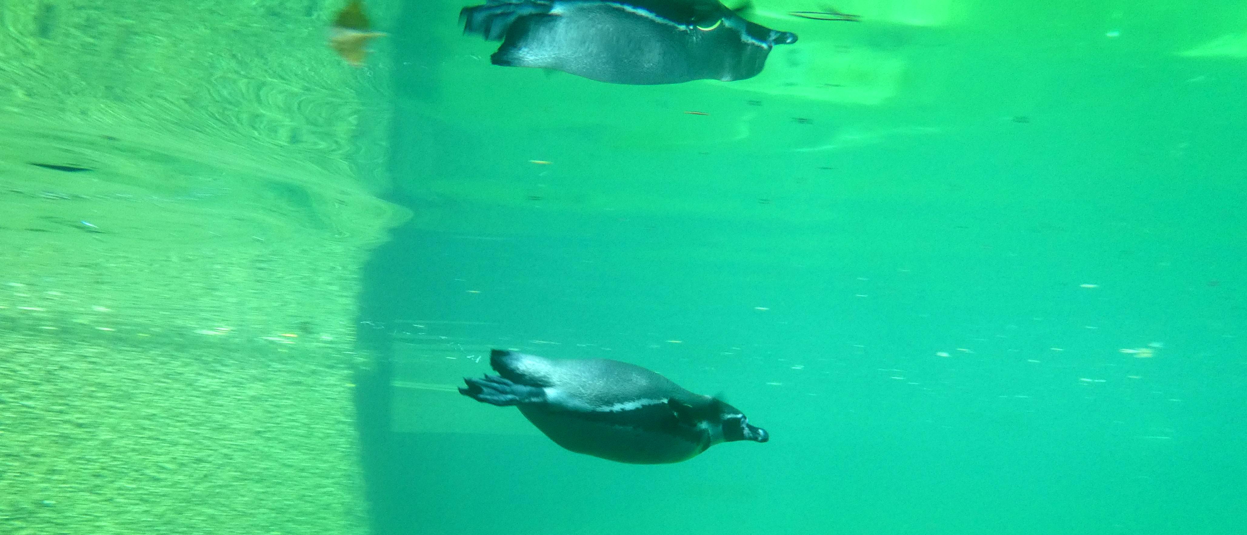 Pinguin  (3)