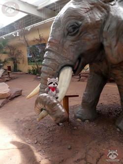 Wuschel und der Elefant