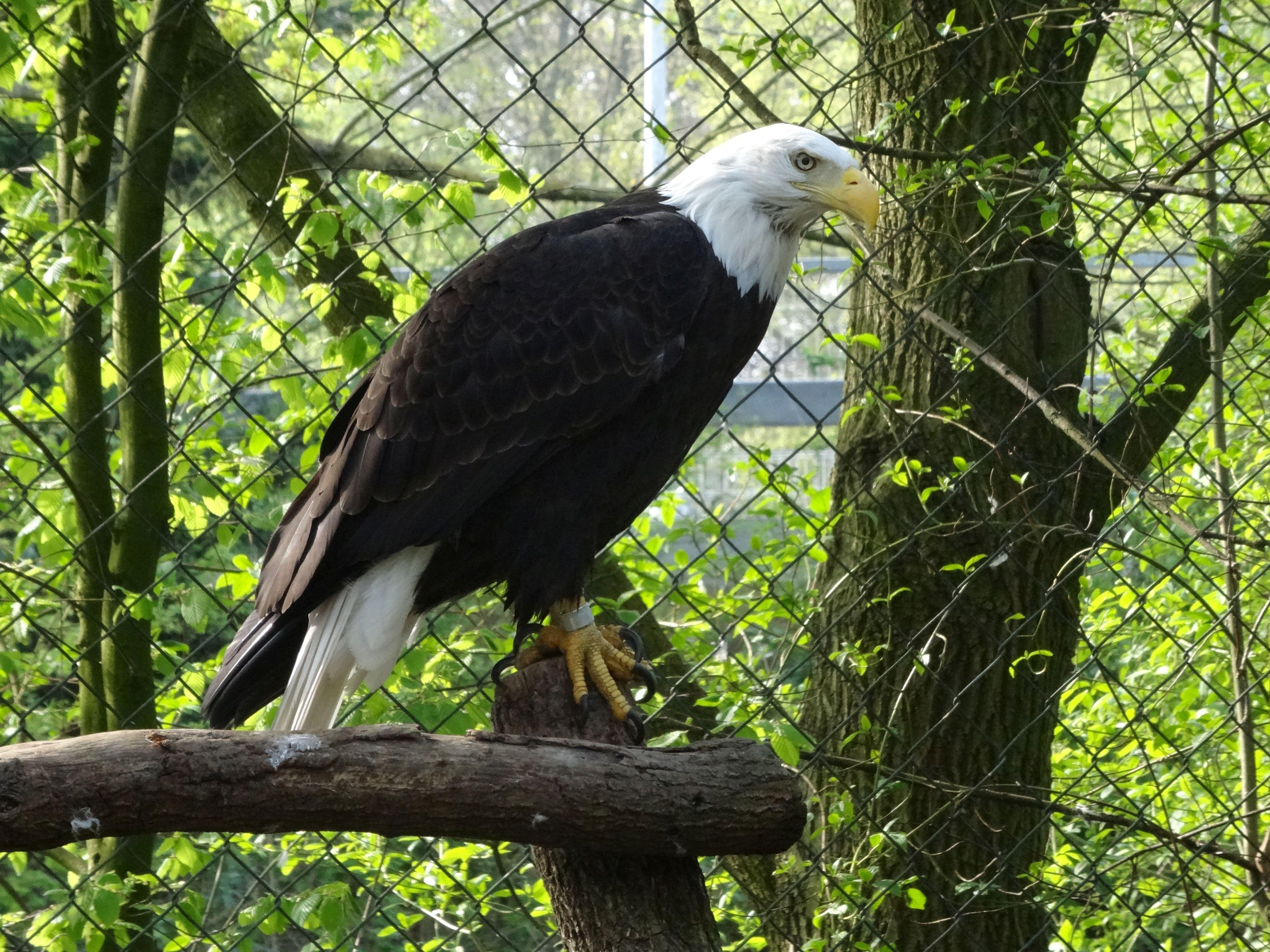 Adler  (6)