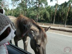 Pferd mit Wuschel (1)