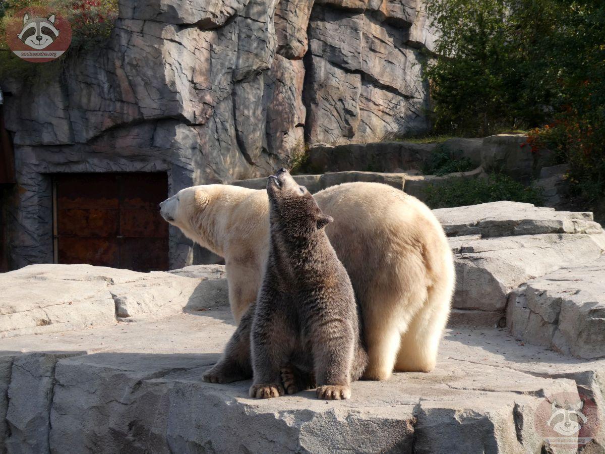 Eisbären_Milana_und_Nana_(22)