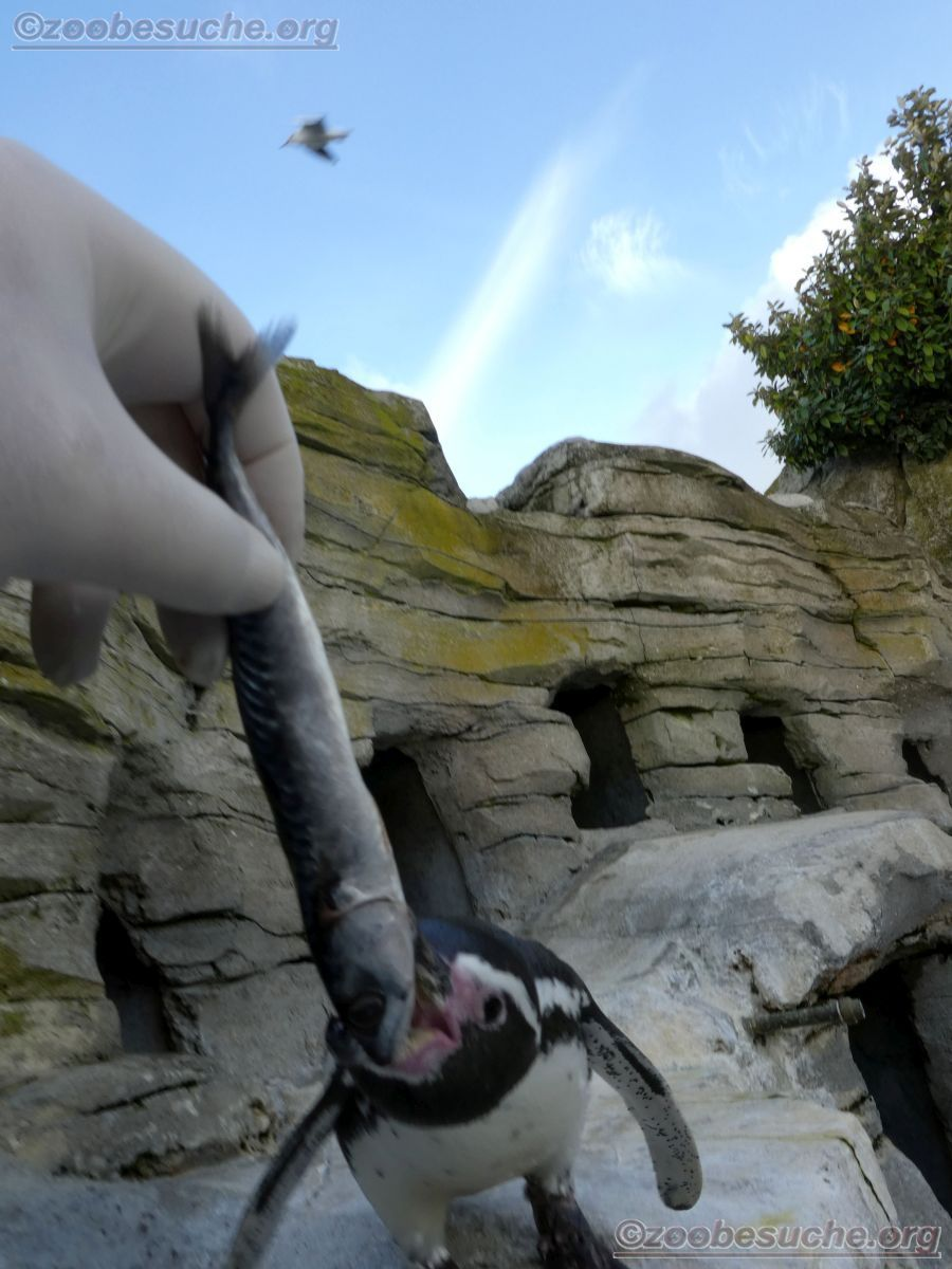 Pinguin  (7)