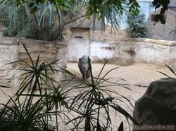 Spitzmaulnashorn Jungtier  (6)