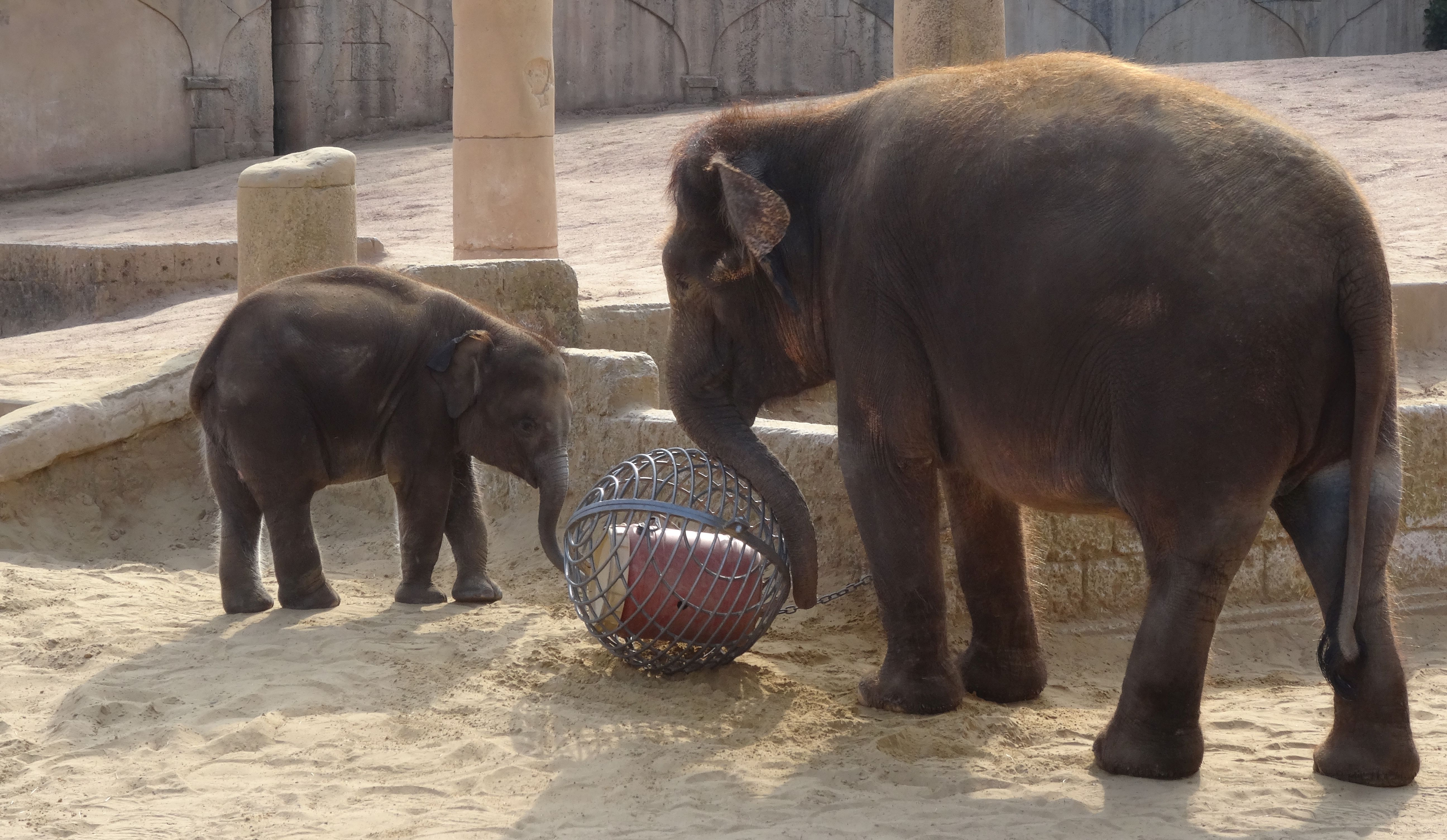 Elefant  (4)