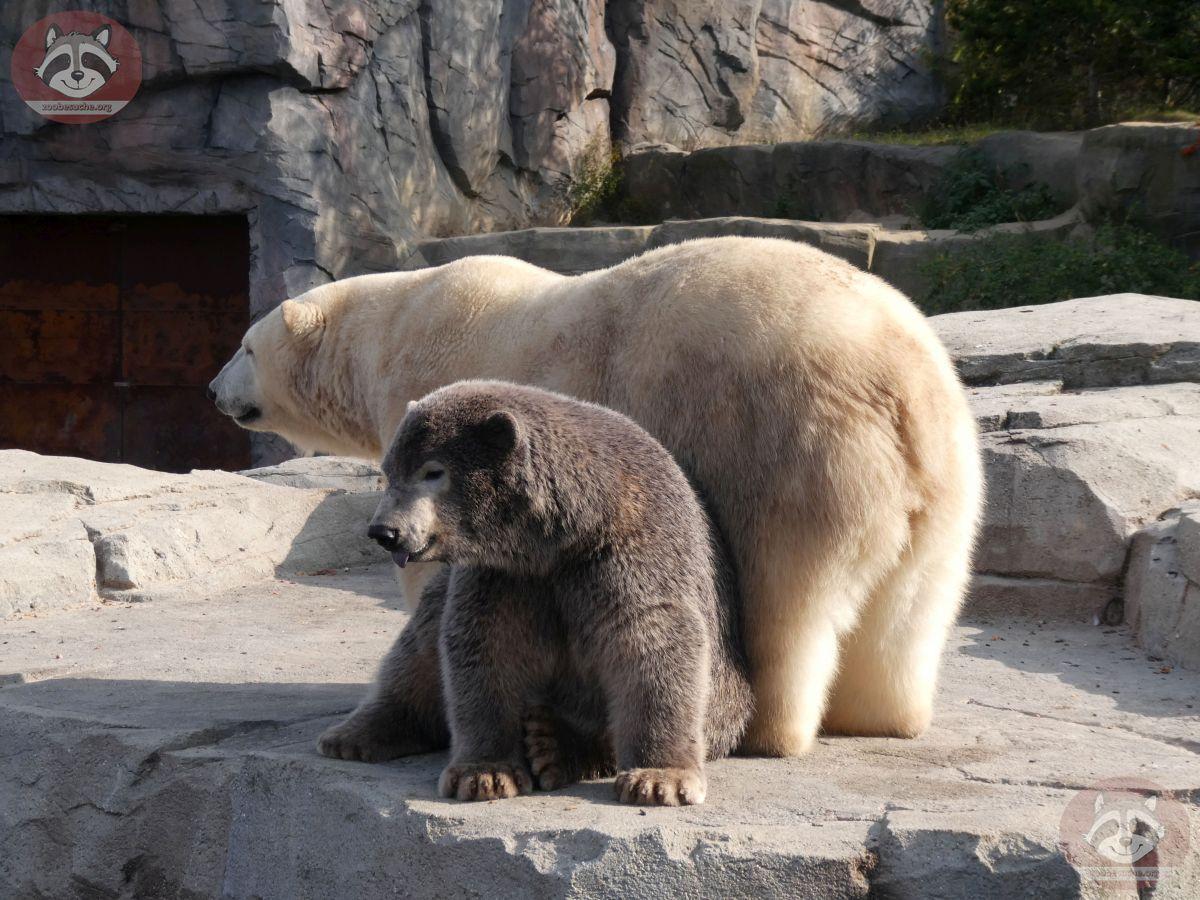 Eisbären_Milana_und_Nana_(25)