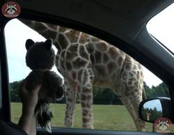 Wuschel giraffe