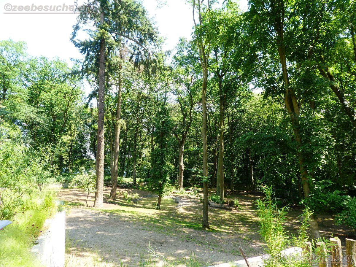 Breitmaulnashorn Gehege (4)