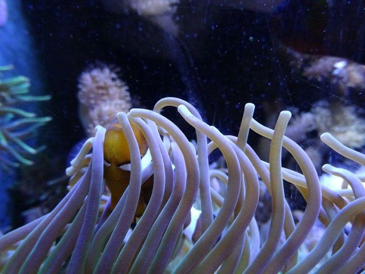 """""""Nemo in seinem Zuhause"""""""