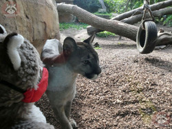 Wuschel mit Puma (17)