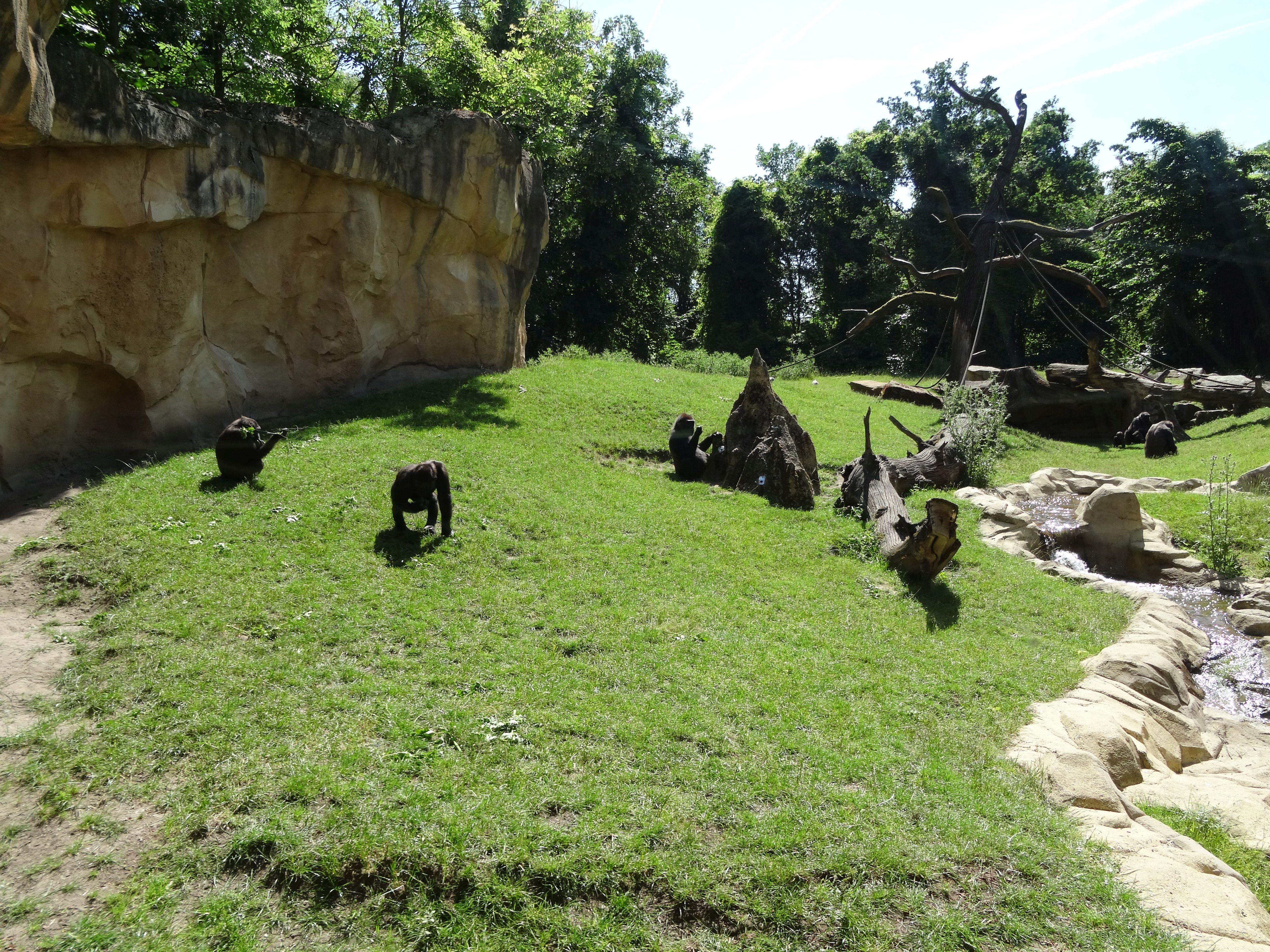 Gorilla  (14)