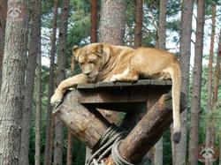 Löwen (12)