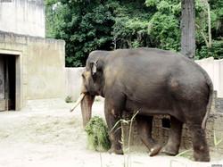 Elefantenbulle Nikolai  (7)