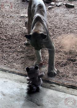 Wuschel mit Puma (5)