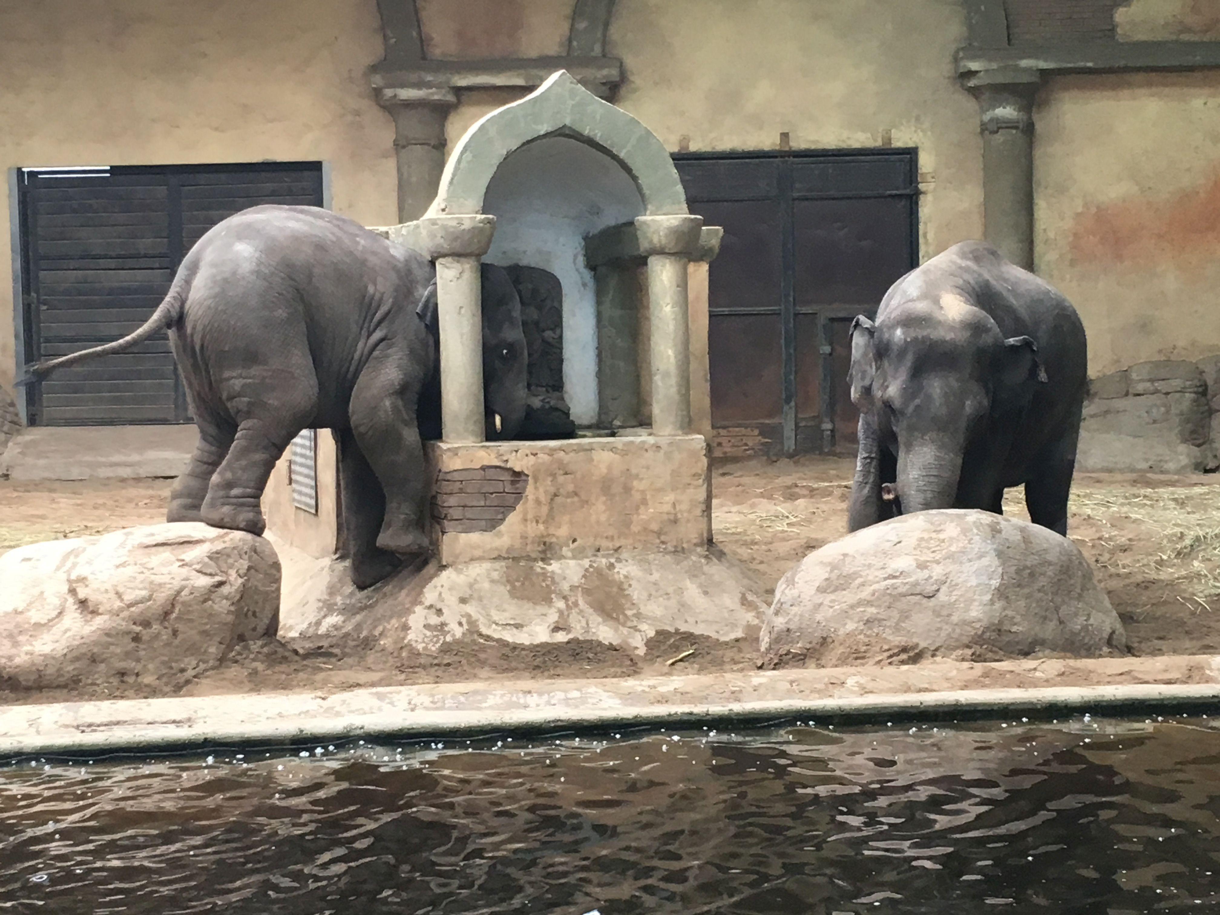 Elefant  (11)