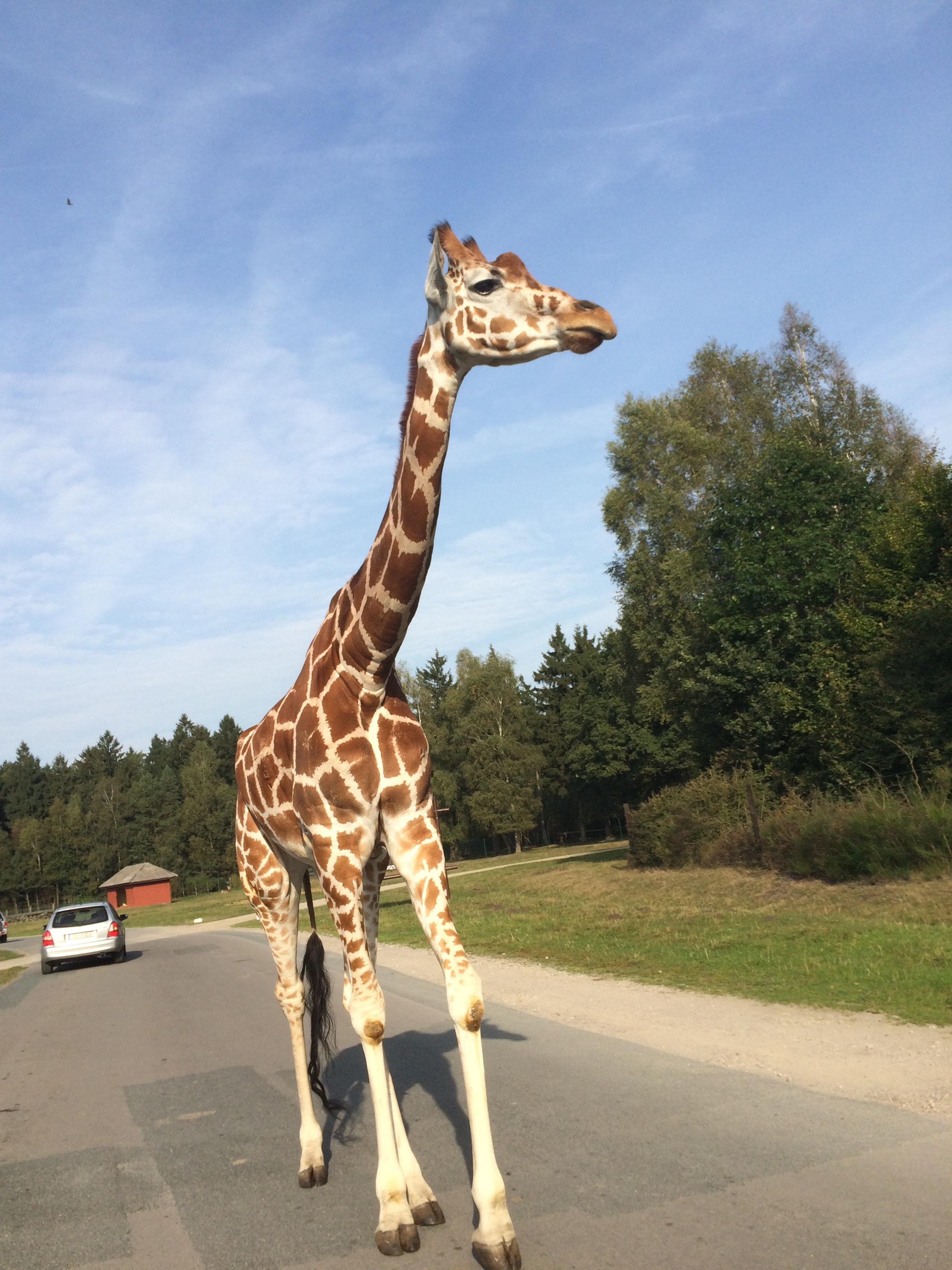 Serengeti Park 013