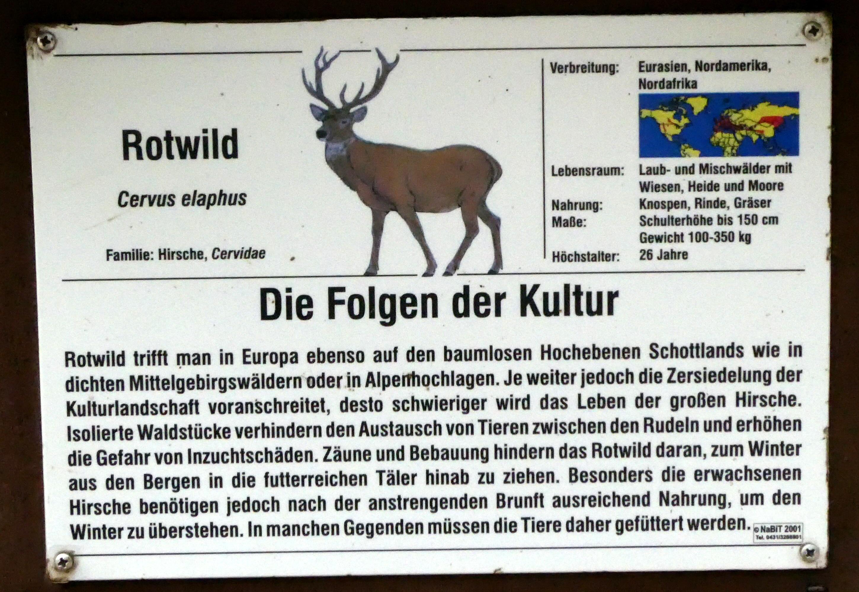Rotwild  (3)