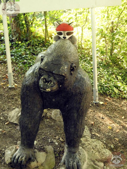 Wuschel auf Gorilla