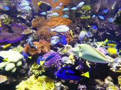 Korallenriff  (2)