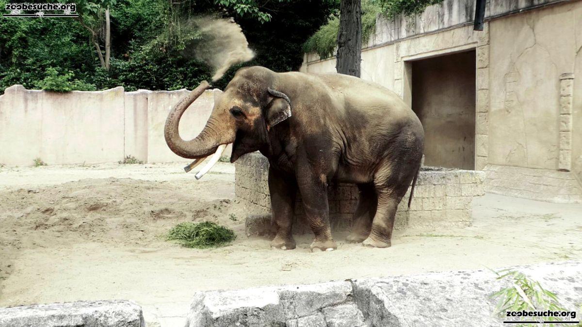 Elefantenbulle Nikolai  (10)