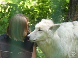 Polarwolf  (12)
