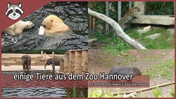 einige Tiere aus dem Zoo Hannover.jpg
