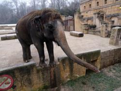 Elefantin Indra