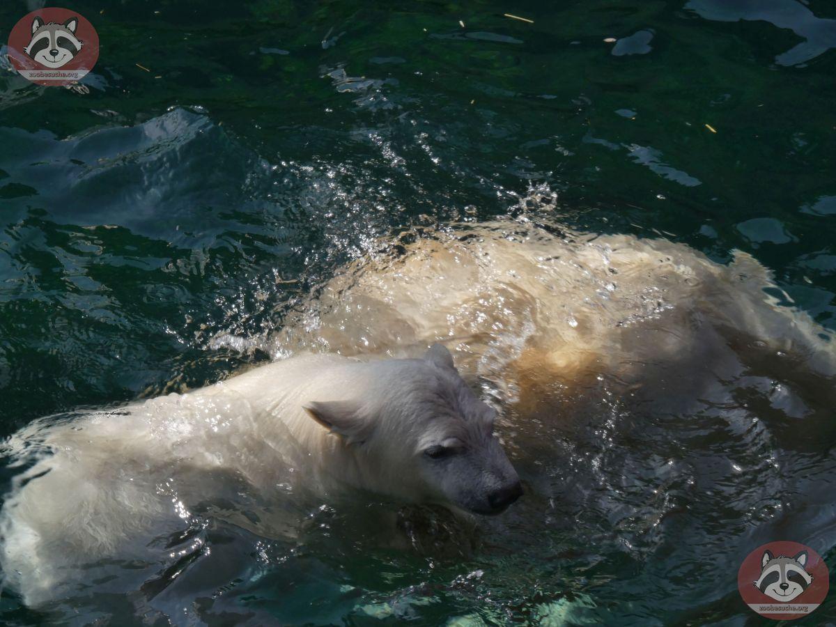 Eisbären_Milana_und_Nana_(10)