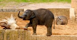 Elefanten  (30)