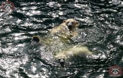 Eisbären_Nana_und_Milana_(5)