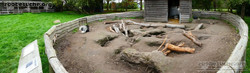 Stachelschwein anlage