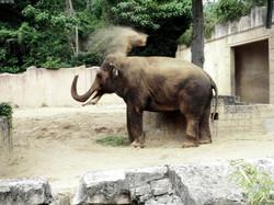 Elefantenbulle Nikolai  (13)