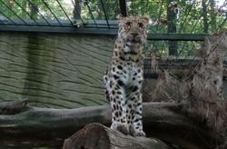 Armur Leopard 3