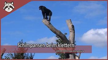 schimpansen.jpg