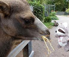 Kamel  (8).jpg